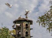 weiße_Tauben