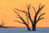 Krömer-Namibia-1399_CC